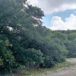 427 Brant Road Carova Outer Banks NC $75,000